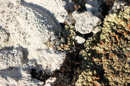 more lichens