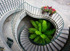 Oasis (Karen_Chappell) Tags: sanfrancisco travel plant fern green architecture stairs circle steps railing curve embarcaderocenter cmwdgreen cmwdweeklywinner