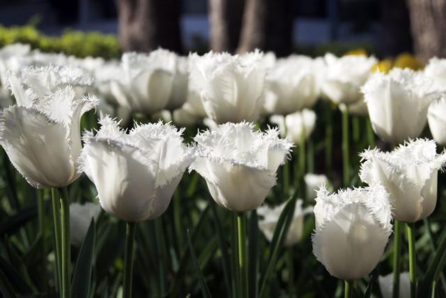 110417_154116_横浜_花と緑のスプリングフェア2011