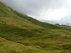 Les vaches dans les pentes du Mont Charvin 027