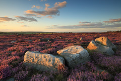 Yorkshire Heather II (rgarrigus) Tags: summer england landscape rocks purple heather yorkshire tse thruscross greatphotographers oldquarry disusedquarry garrigus robertgarrigus robertgarrigusphotography