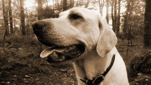 Orvis Dog of the Day- Brady!