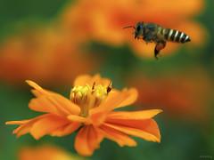 Landing (-clicking-) Tags: lighting flowers light macro floral beautif
