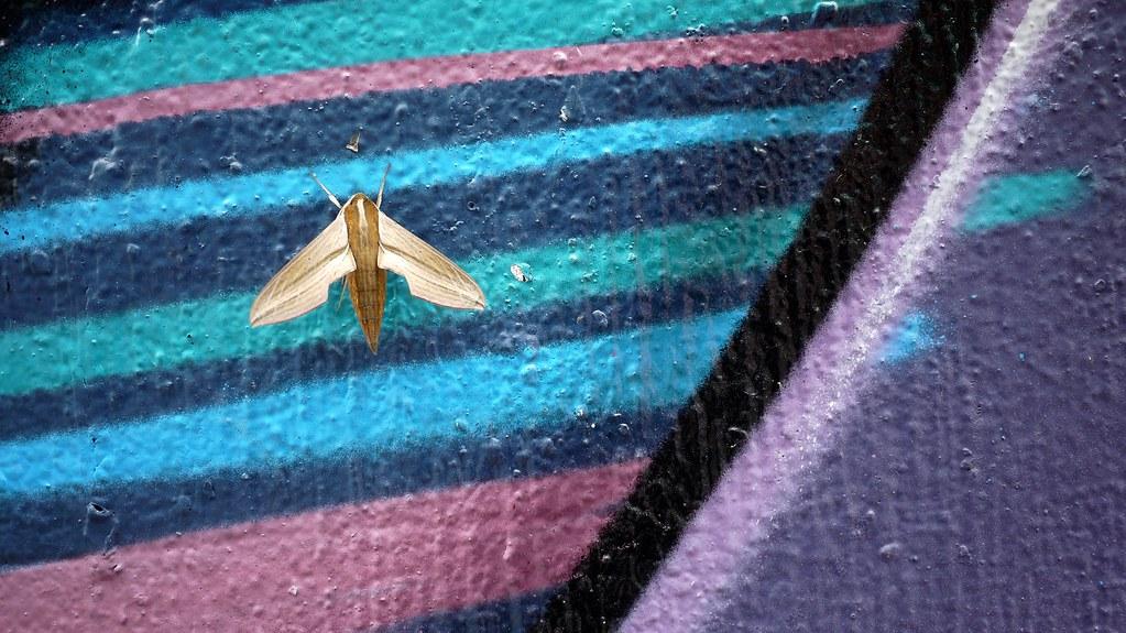 High Contrast Bug