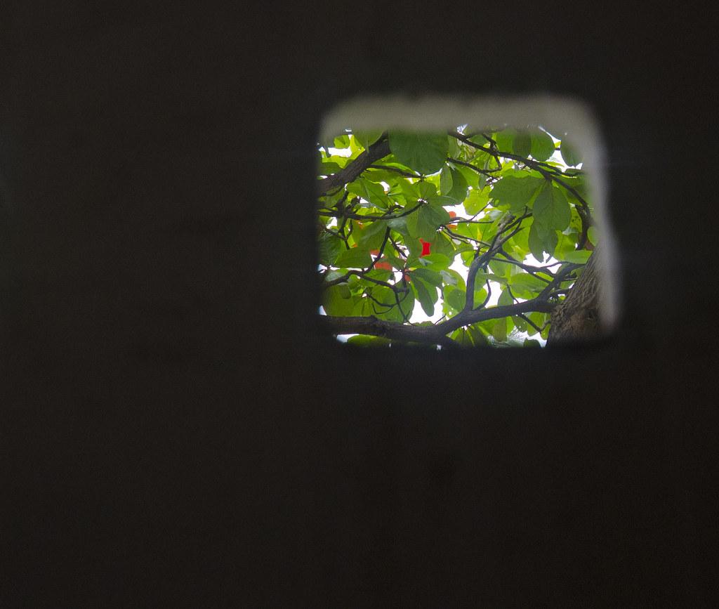 Shaded Window