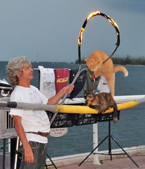 Key West Cat Man (wortenoggle) Tags: sunset man west cat hoop key florida flaming catman