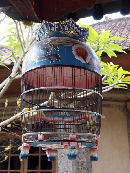 Nasi Ayam Kedeatan IBU MANGKU