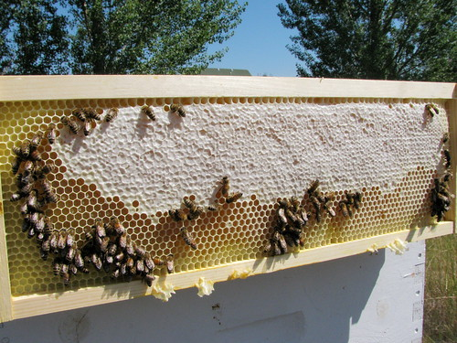 Honey frame - August 20, 2011 by D.Broberg