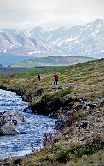 Denali - Savage River Hike