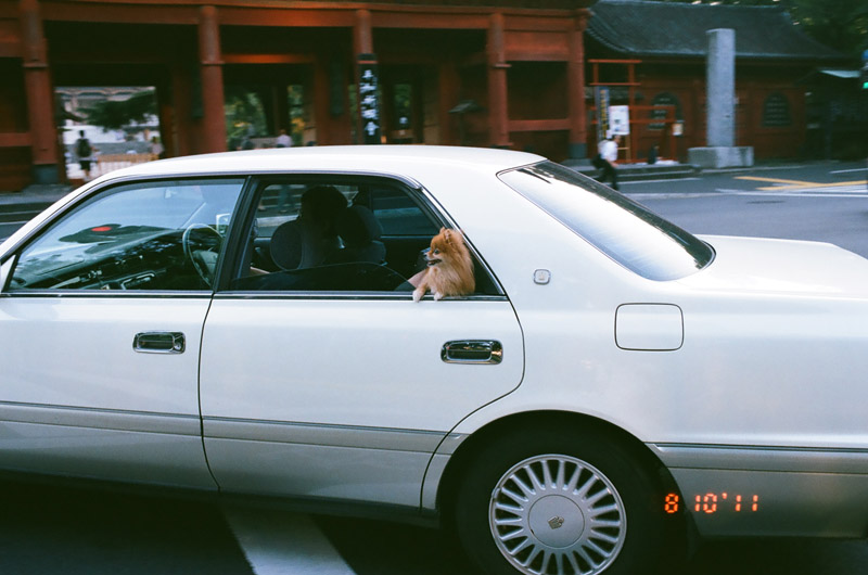 dogincar (4 of 9)