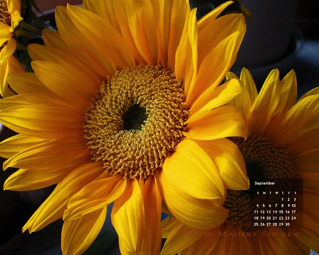 a flower photo for your home decor of a deep warm yellow and orange sunflower glowing in the early morning sunshine