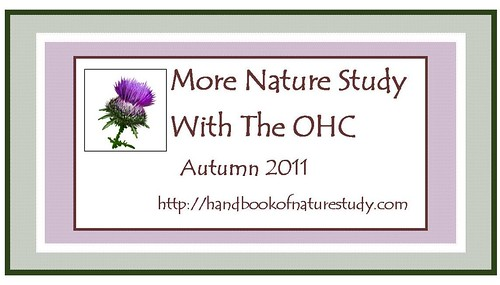 More Nature Study Button