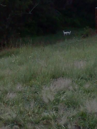 My new deer!