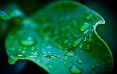 Green drops (74Pics4U) Tags: macro green water droplets forprint cotcpersonalfavorite