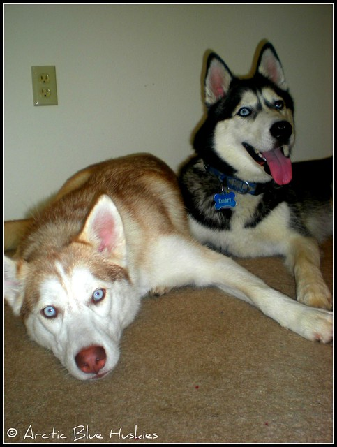 Embry, Zoey & Ares's Scrapbook! Updated *12.10* - Page 2 6103947739_0f839acc64_z