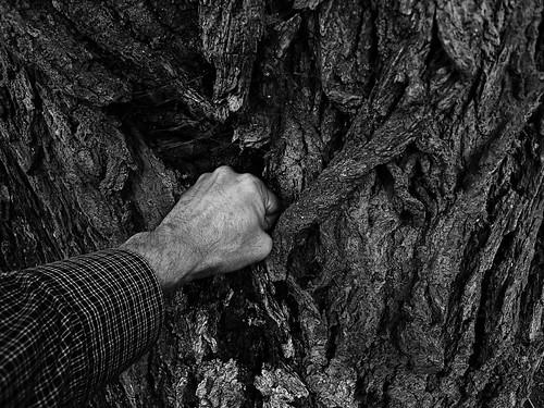 Ett träd får en smocka
