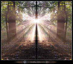The Epiphamy (Erroba) Tags: trees light green sunshine forest sunrise canon woods belgium belgique belgië symmetry rays split leafs erlend closeencounters bullshit roosendael 24105 paranormalactivity 60d erroba epiphamy robaye