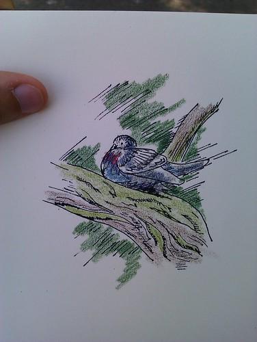 Springfield park birds