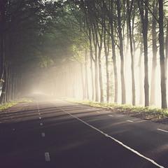212 of 365 (Morphicx) Tags: sun sunlight green nature dutch fog sunrise forrest foggy beautifullight naturallight paula canon5d 365  canon1740f4l morphicx 365shotsin365days