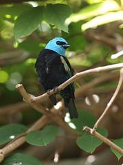 bird zoo sandiego