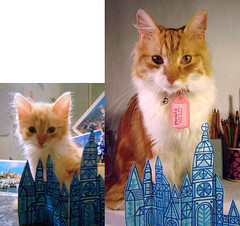 What a difference a year makes (maralina!) Tags: blue orange cute cat ginger kitten diptych chat kitty fluffy metric crystalcity roux minou matou tomcat mignon chaton pomelo grownup oneyearanniversary gkp itsalldownhillfromhere castlebyrobdunlavey