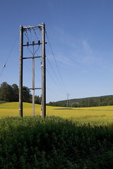 Turnip rape field in July at Julkula, Kuopio - 1 (J-P Korpi-Vartiainen) Tags: city summer flower nature beautiful field yellow electric rural finland landscape countryside scenery europe view blossom hill july august vegetable line oil electricity production suburb mast agriculture finnish northern idyllic lakeland hilly kuopio maisema kes luonto rapeseed cultivate linja kaupunki keskuu kukka tolppa heinkuu maaseutu pelto nkym shk kaunis kukkiva niitty keltainen kesinen mki shklinja rauhallinen mkinen rypsi rypsipelto maalaismaisema julkula maanviljely niuva esikaupunki shktolppa pohjoissavo viljapelto viljely idyllinen kumpuileva ljykasvi jpko kasvintuotanto kasviljy lnsipuijo