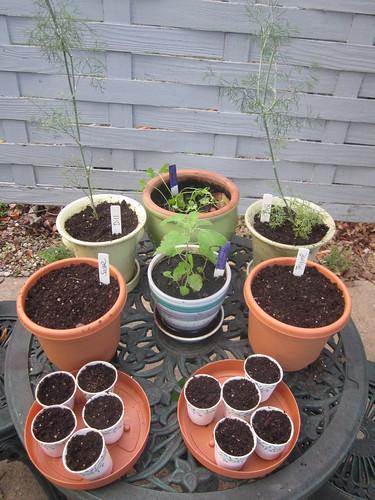 herb garden 9-5