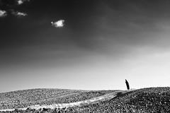 The way of dreams (nicola tramarin) Tags: italy nature alberi clouds italia nuvole natura cielo toscana bianconero biancoenero tuscay cipressi cipresso monocromatico nicolatramarin