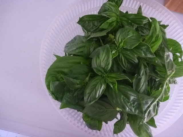 Basil Pinchings