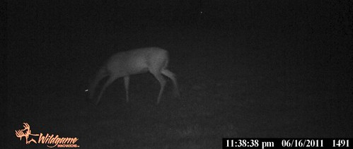 AnotherDeerJune2011GameCam