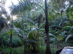 DSC02721 (rantavani) Tags: plantas tropicais