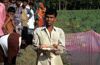 Aquaculture, Bangladesh,photo by Mark Prein, 2006_