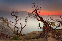 Ijen trees (Helminadia Ranford(New York)) Tags: travel trees sunrise indonesia volcano java east eastjava ijen