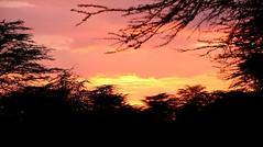 IMG_4726 (walter.innes) Tags: monkey buffalo eagle kenya lions zebra crocodile cheetah giraffe hippo elephants vulture wildebeast hyena stork blackrhino secretarybird lakenaivasha maasimara walterinnes maasitribesman
