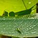 Shades of Green-6209