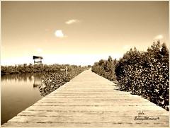 O CAMINHO PARA NATUREZA PLENA... (Edsyo Moreira, #UmPaisagista) Tags: brasil riodejaneiro cabo frio spia costadosol canoeironativo manguezaisihadoanjoesiqueiraedesyomoreira