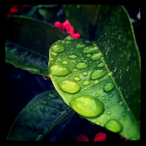 raindrops again