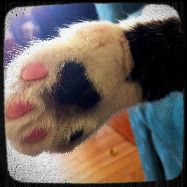 BAM! Kitten foot.