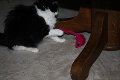 Josie with the new pink mouse