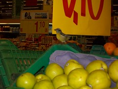 Day 155 Project 365 (Crafty_witchy_girl) Tags: bird passarinho supermarket 365 grocerystore passaro supermercado 365days 365project onephotoaday projeto365 365dias umafotopordia