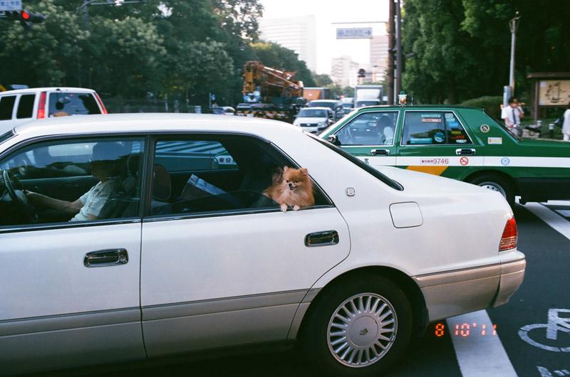dogincar (3 of 9)