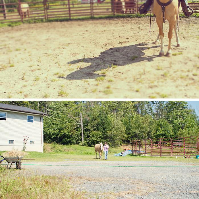 Halifax NS Wedding Portrait Horse Equine photography - Splash & Donna - Nicole Payzant -  (16 of 26)