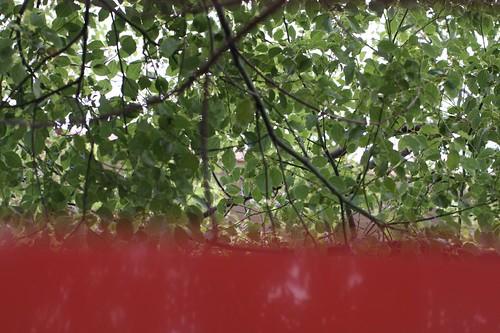 涼風 / The shade of  trees of the Shinto shrine