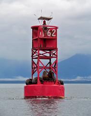 On the way to Le Conte (Vida Morkunas (seawallrunner)) Tags: life usa alaska harbour ships ak petersburg glacier cwall leconte