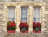 Window boxes (davekpcv) Tags: uk flowers windows red england window canon catchycolors geotagged raw britain devon bloom windowbox ilfracombe floraldisplay windowboxes g9 placestovisitindevon yahoo:yourpictures=inbloom