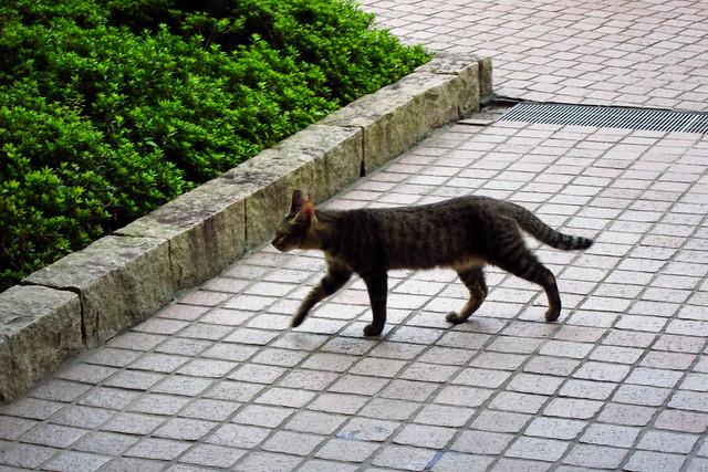 Today's Cat@2011-08-28