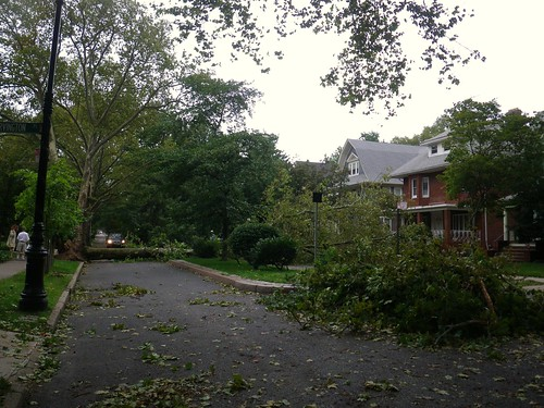 Tree down 17th St. 3