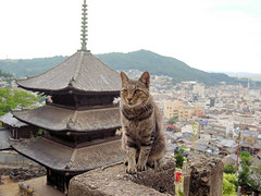 ONOMICHI DAYS ~ Tenneiji Temple   (junog007) Tags: sea summer japan cat evening niceshot hiroshima richo onomichi gx200 mygearandme mygearandmepremium mygearandmebronze osakasummernikond700japankansai
