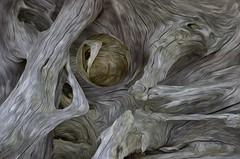 Driftwood Gothic
