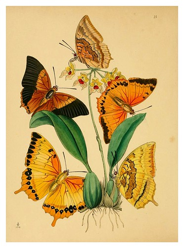 009- The cabinet of oriental entomology…1848- John Obadiah Westwood